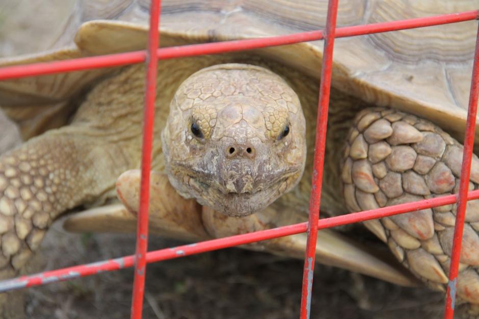 Turtle!!!!!