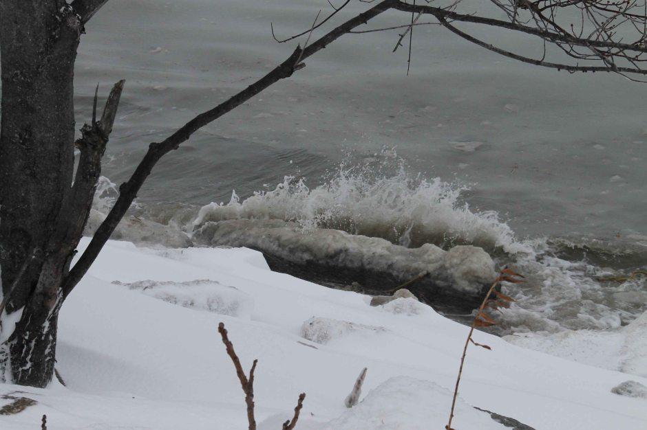 snowy driftwood